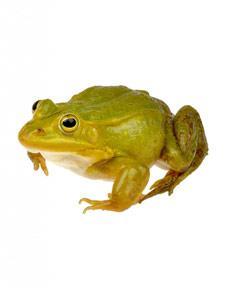 Frog Anatomy Quiz
