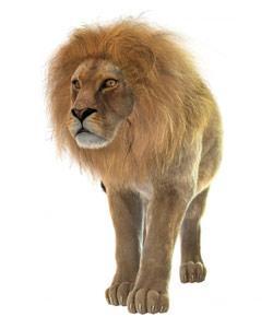Top Lion Quizzes Trivia Questions Amp Answers Proprofs