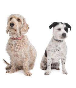 What Dog Breed Is Right For Your Family?