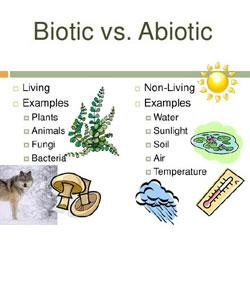 Biotic and abiotic factors! Radical reservoirs.