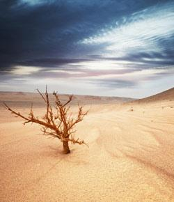 Gaara Of The Desert Quiz