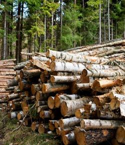 Forestry - Basics
