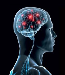 Test Your Brain With Facts And Questions About The Brain:� Neuroscience Quiz