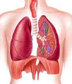 Sem 1, Pulmonary Mechanics Practice Questions