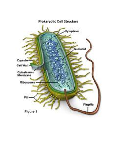 Cell Biology( Prokaryotes,Eukaryotes,Functions In Cell)