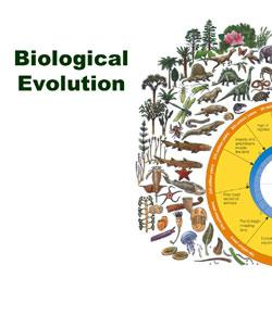 Biology Final - Evolution