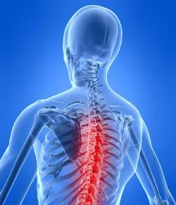 Spine Quiz