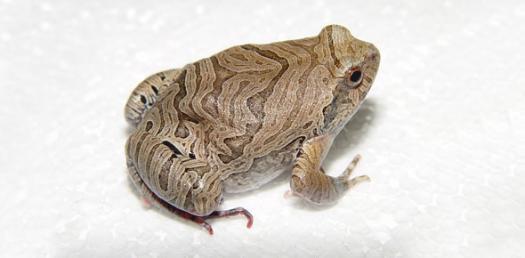 Amphibian Quiz