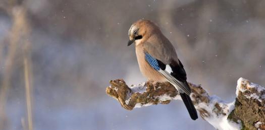 What Pet Bird Should You Get