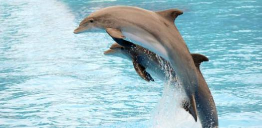 Dolphin Languages Lower Level Test