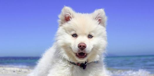survivor dog name and type proprofs quiz