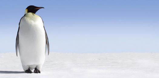Clopton Penguin Chick Vocabulary