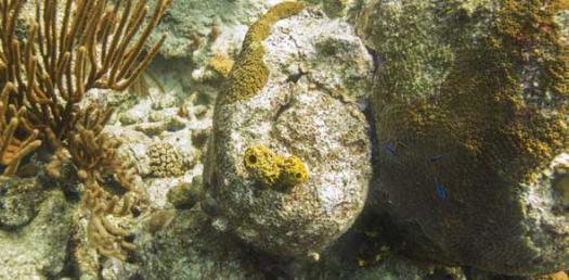 Sponge Bob Quiz