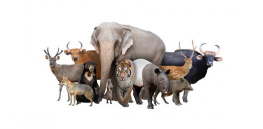 Would You Consider Yourself To Be A Tame Or Wild Animal?