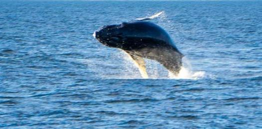 Test Your Knowledge About Whales