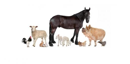 Wild And Domestic Animals Quiz