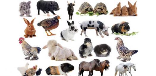 Wildlife & Domestic