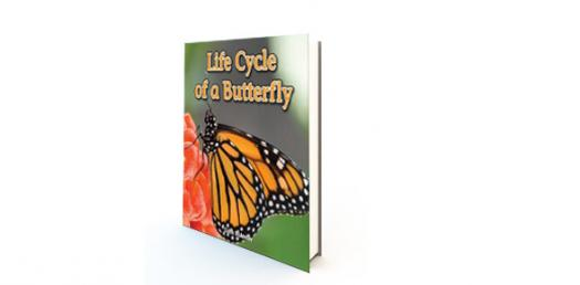 Butterfly Life Cycle 1st Grade Test