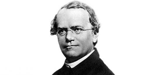 Image result for Gregor Mendel