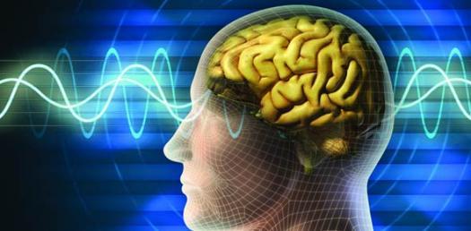 E-learning Neuroanatomy Quiz Questions
