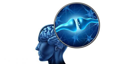 Neurotransmitter Trivia Questions