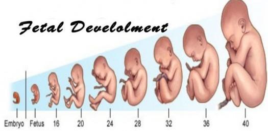 Fetal Development Quiz - ProProfs Quiz