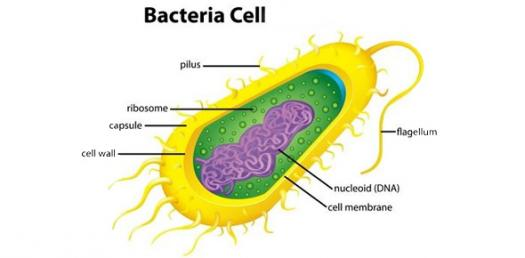 it's all about a bacterial cell! - proprofs quiz