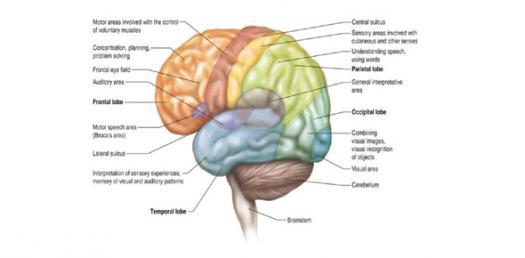 Motor Speech Of Nervous System Quiz 3