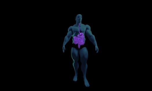 Digestive System Practice Quiz - ProProfs Quiz
