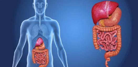 digestive system quiz - proprofs quiz, Human body