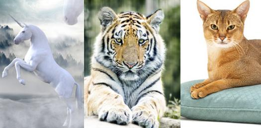 Are You A Unicorn, Tiger, Or House Cat?