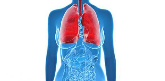Block 11 Pulmonary Path Dr Bellot Prt 1