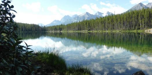Ecology, Biome, & Environment Quiz