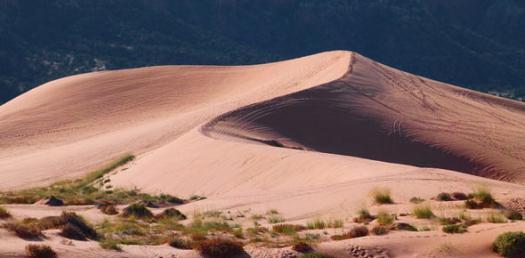 Desert Quiz