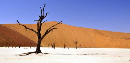 Sahara Desert Quiz