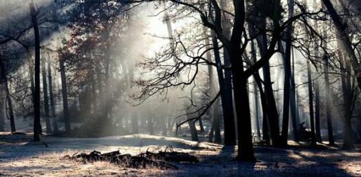 Deciduous Forest