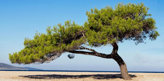 Tree And Leaf Quiz