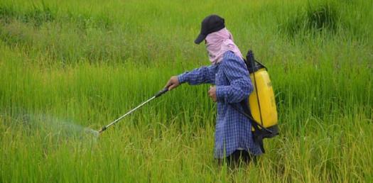 4.6 Pesticides & Fertilizers*