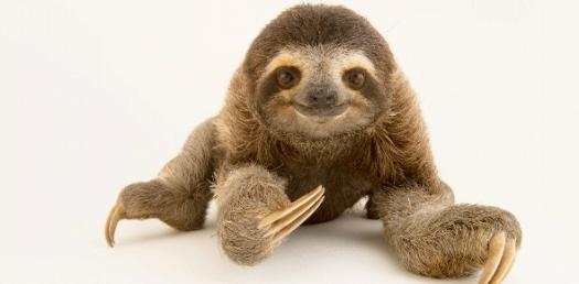 Do You Know Who A Sloth Is?