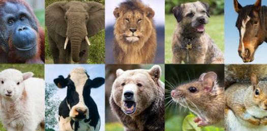 What Animal Am I? A Fun Quiz
