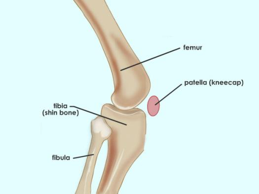 Functions Of Bone Joints!