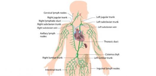 Medsurg Immune And Lymphatic System Quiz