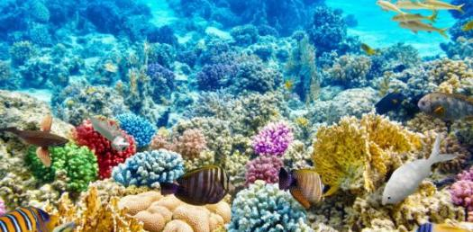 Let's See What Coral Reef Are You? - ProProfs Quiz