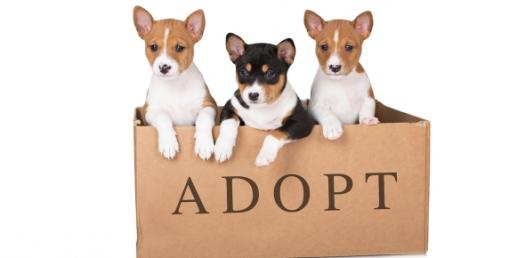 What Type Of Pupper Would You Adopt?
