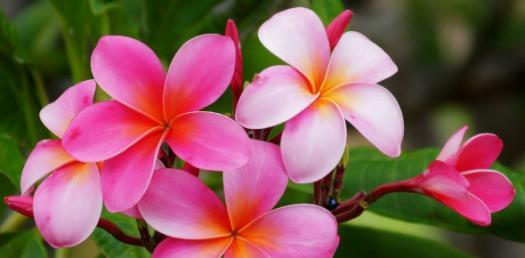 Flower Match Quiz