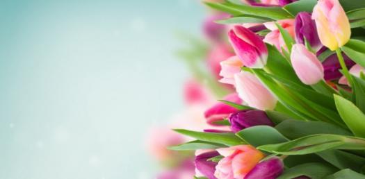 Flower Structures Quiz