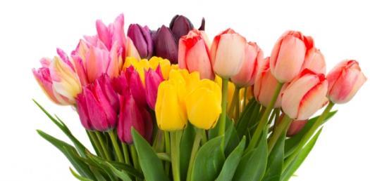 Floral ID Practice Quiz