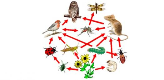 The Environmental Literacy Over Ecosystems