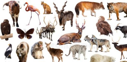 What Type Of Animal Are You? Take This Quiz!
