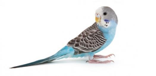 The Monk Parakeet Trivia Quiz